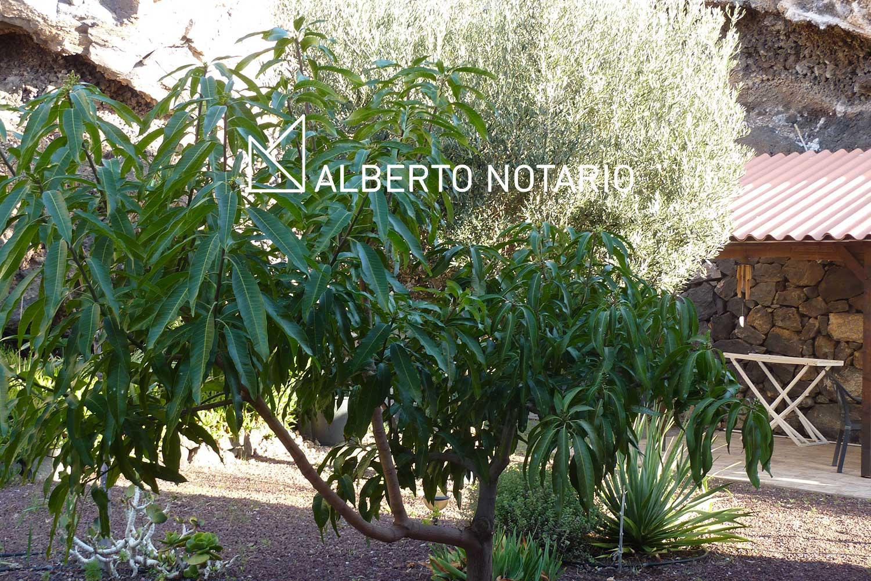 tenerife-teresa-01-albertonotario