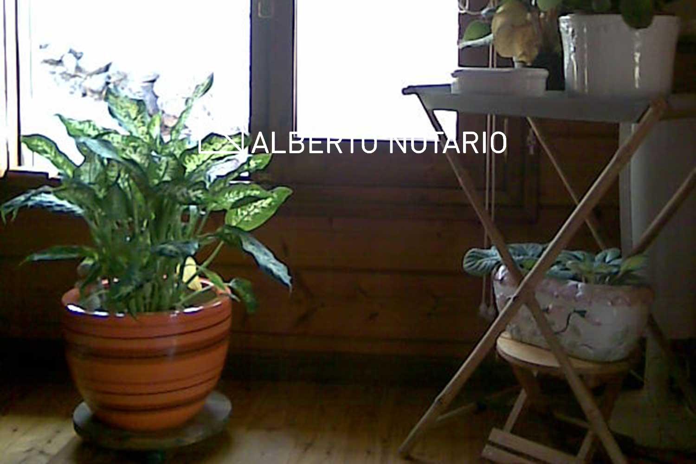 tenerife-teresa-06-albertonotario